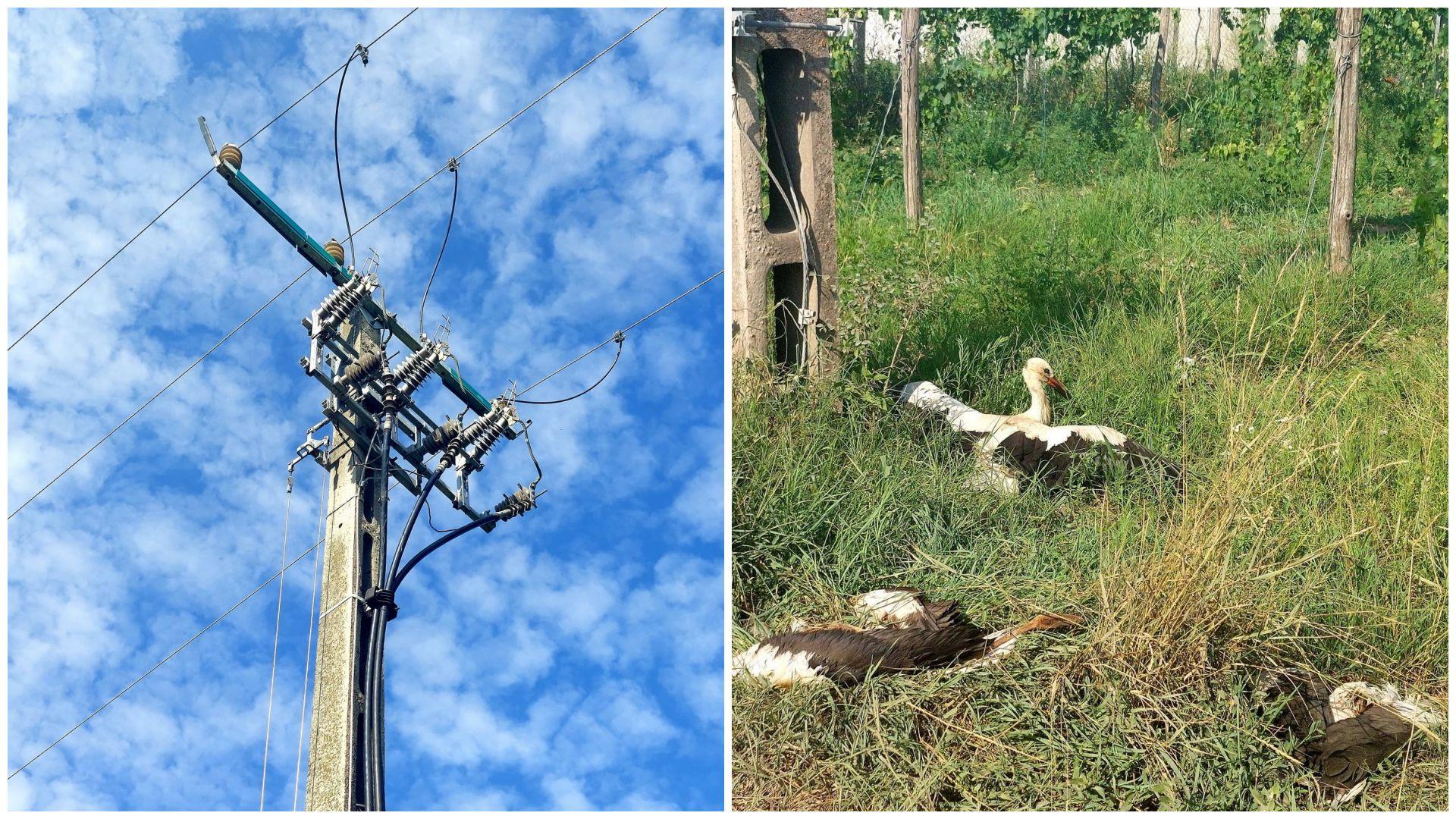 Áramütés végzett a gólyákkal