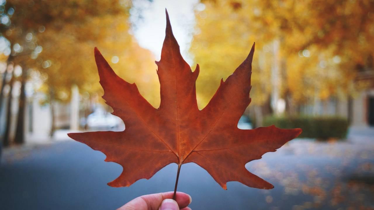 őszi falevél