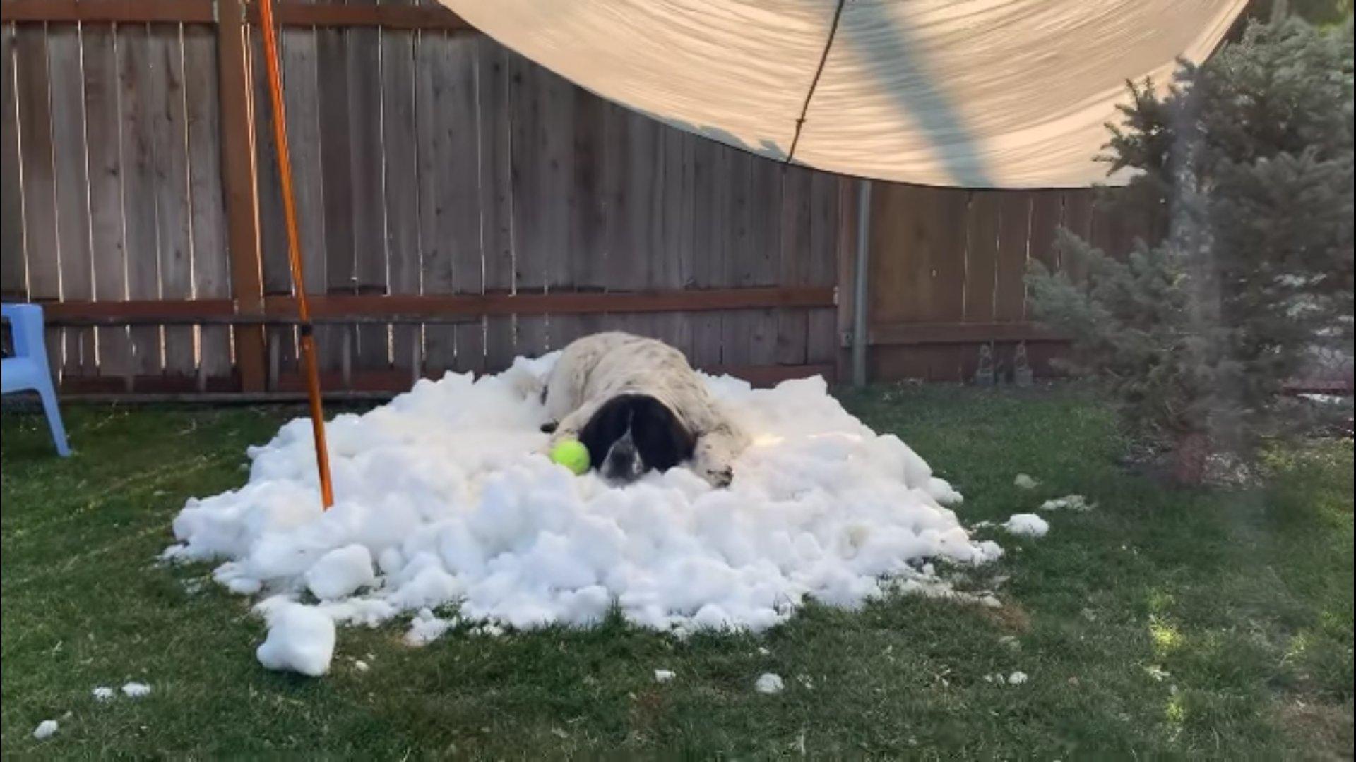 Havat szereztek szeptemberben a haldokló kutyájuknak