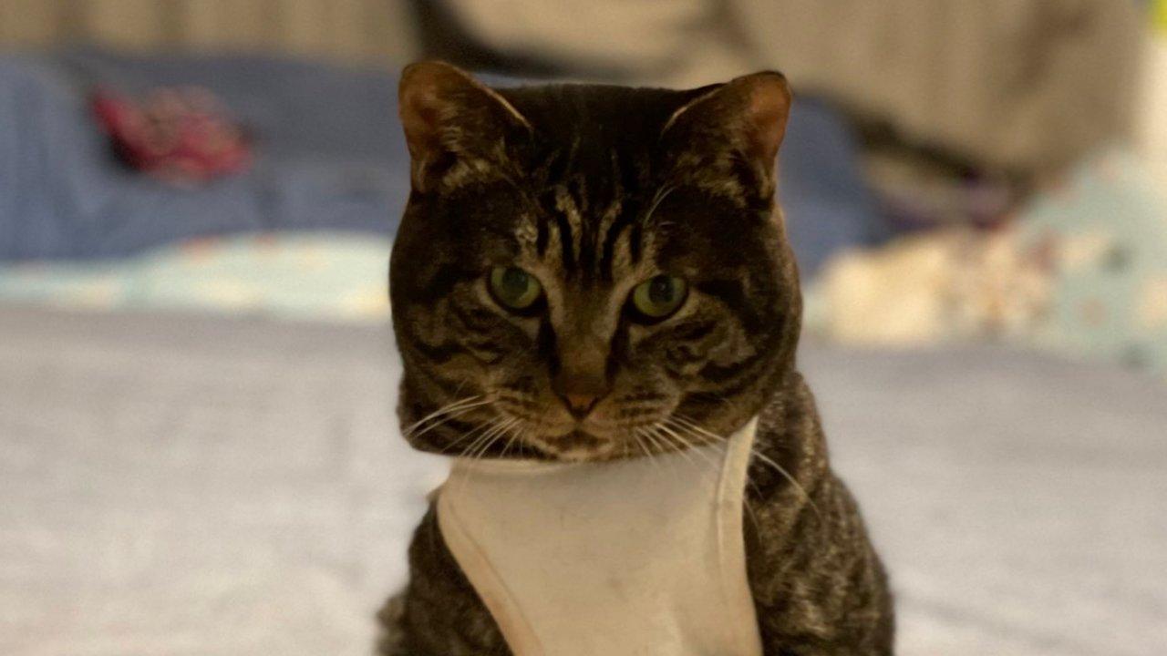 Cuki fotó: szupermodellként pózolt a mentett cica