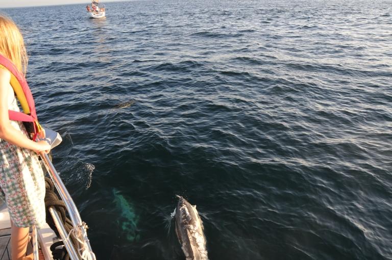 """Távolságtartás a tengeren – a Covid-járvány miatt csak a delfinek jöhetnek közel a hajóhoz. """"Rengeteg hajós család van körülöttünk, akikkel valamilyen szinten tartjuk a kapcsolatot, de nyilván könnyebb lenne úgy, ha nem kellene a koronavírus miatt korlátozni magunkat az érintkezésben. Az Atlanti átkelés előtt jobban odafigyeltünk a kockázatokra, és az indulás előtt csináltunk tesztet, hogy nehogy valaki út közben az óceán közepén legyen beteg. Azok az ismerősök, akik túlestek rajta, nagyon legyengültek, és elég kínos lett volna, ha az óceán közepén legyengül az egész csapat, és senki nem tudja a hajót vezetni. Most is figyelünk a Covidra, de egy fokkal jobb a helyzet, mint az Atlanti átkelés előtt. Nagy tömegbe, rendezvényekre a szárazföldön most sem járunk el. Egyébként itt a Karib-térségben nincsenek olyan szigorú korlátozások, mivel kevés a megbetegedés. Ha boltba megyünk, lefertőtlenítjük, amit veszünk, alapos kézmosást tartunk és maszkot hordunk."""